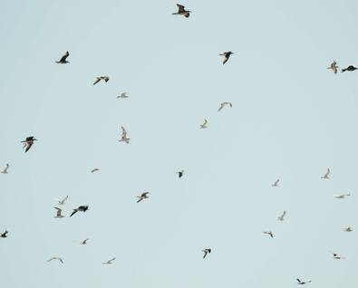 День наблюдения за птицами