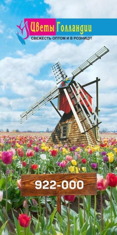 Цветы Голландии