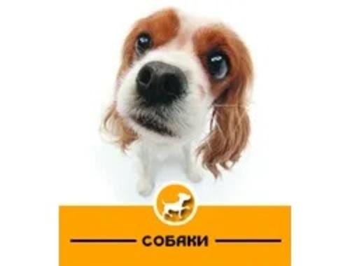 PetShop39.ru