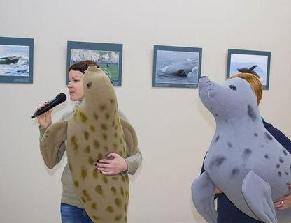 День тюленя на Куршской косе