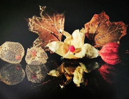 Выставка «Осень рисует дождём» фотохудожника Татьяны Шруб