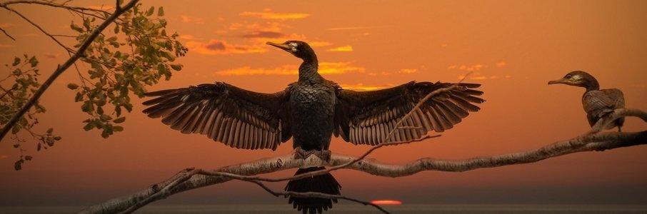 «Птицы Балтики. В гармонии с водной стихией»