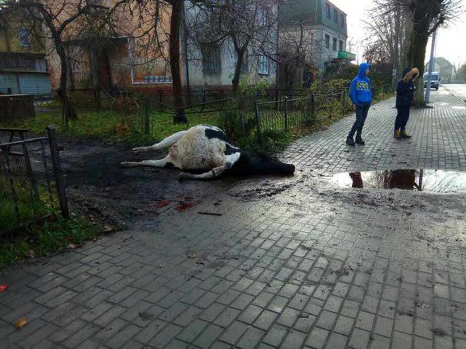 Фото: сообщество Багратионовск инфо