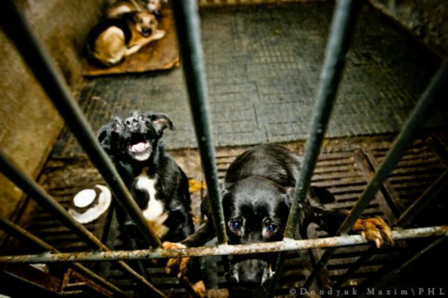 недвижимость СПА собаки и кошки в пермских приютах сегодня Рамзан