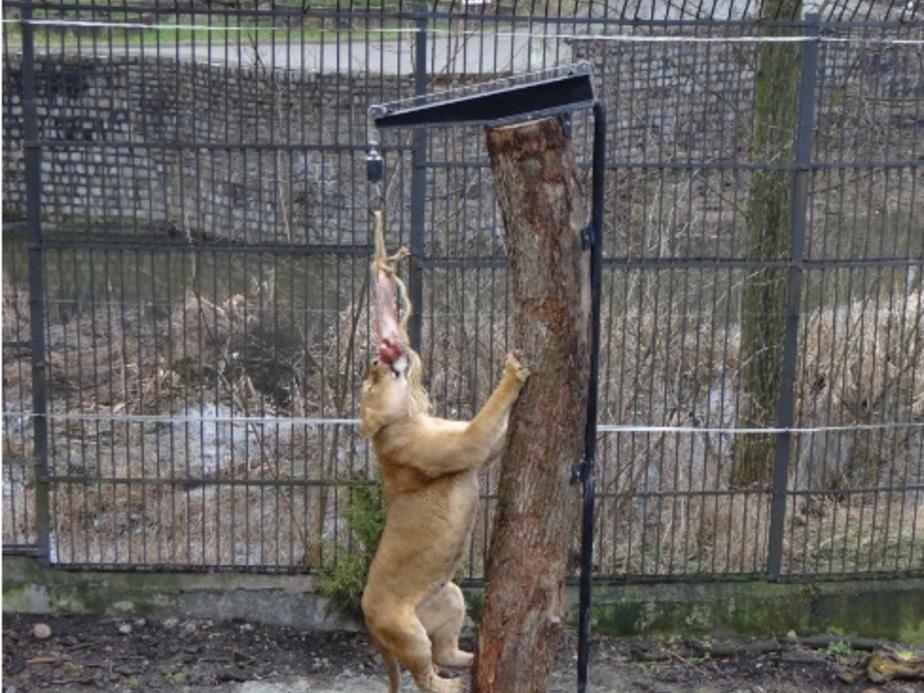 Фото: пресс-служба Калининградского зоопарка