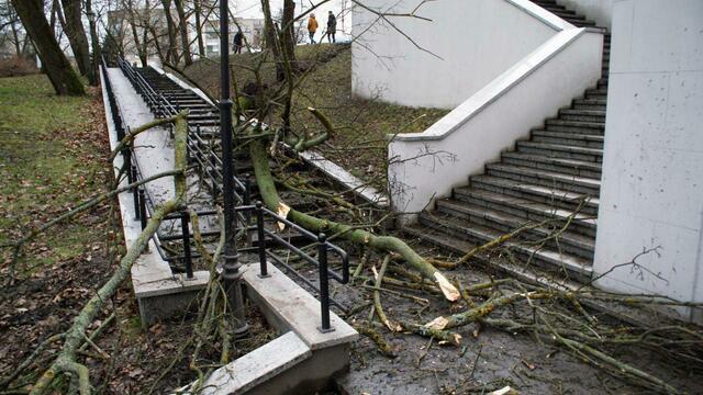 На Нижнем озере вырванное с корнем дерево перегородило лестницу (фото)