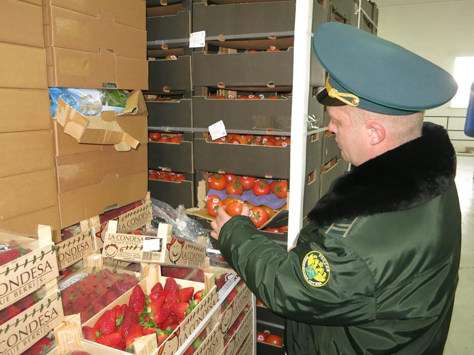 Фото пресс-службы Калининградской областной таможни