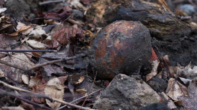 Офицер вермахта и гражданские: на стройке в Калининграде эксгумировали останки уже 84 человек