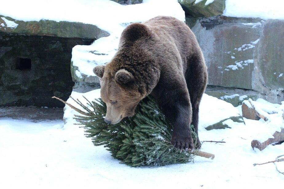 Фото: предоставлено пресс-службой зоопарка