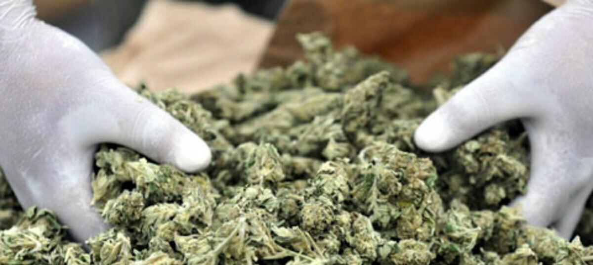 Как купить марихуану минск масло из стеблей конопли