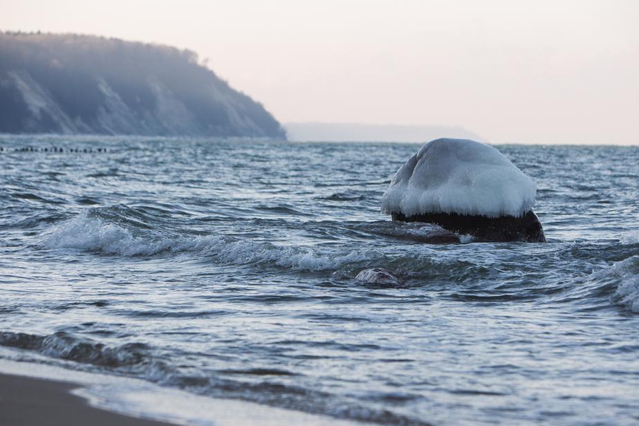 На Куршской косе вмёрзли в лёд медузы