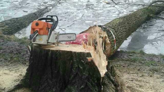 Стало известно, для чего вырубают деревья в Южном парке