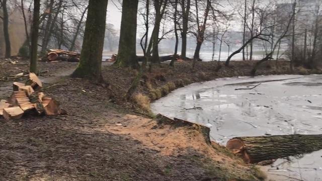 Появилось видео вырубки деревьев в Южном парке
