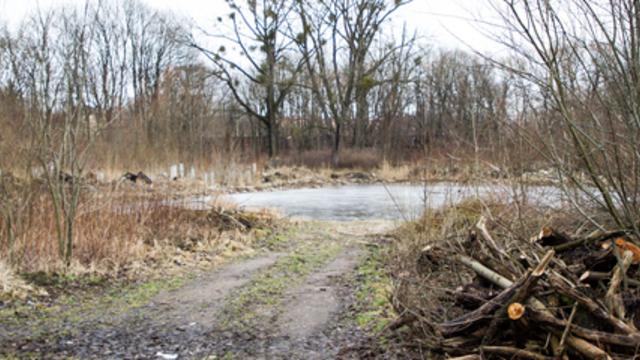 Мэрия: в Южном парке посадят грабы, буки и клёны вместо вырубленных деревьев