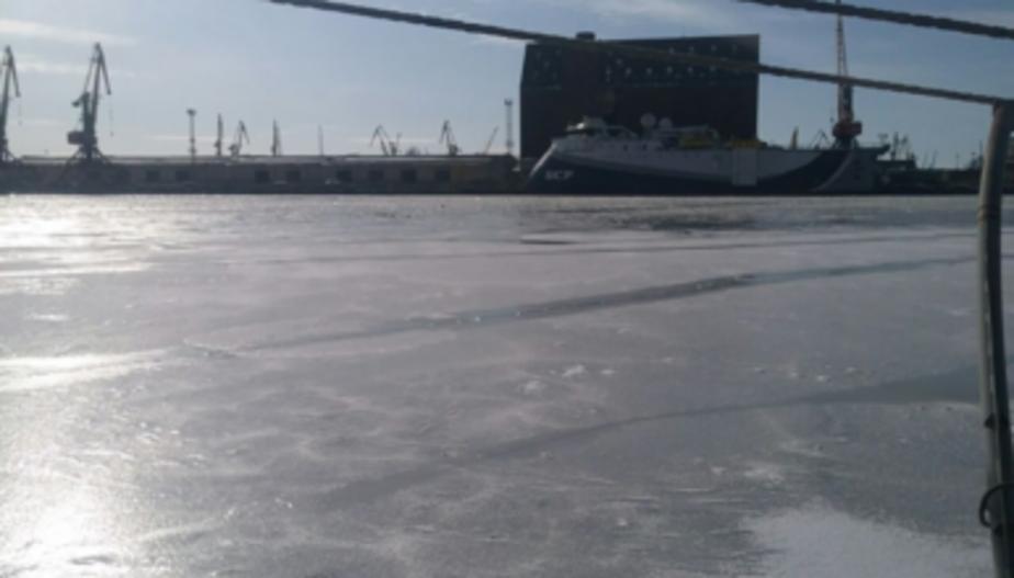 В Калининграде лебеди вмёрзли в лёд на Преголе