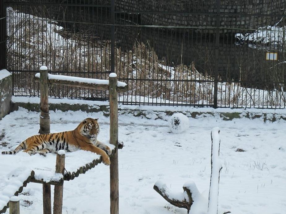 Фото с сайта Калининградского зоопарка