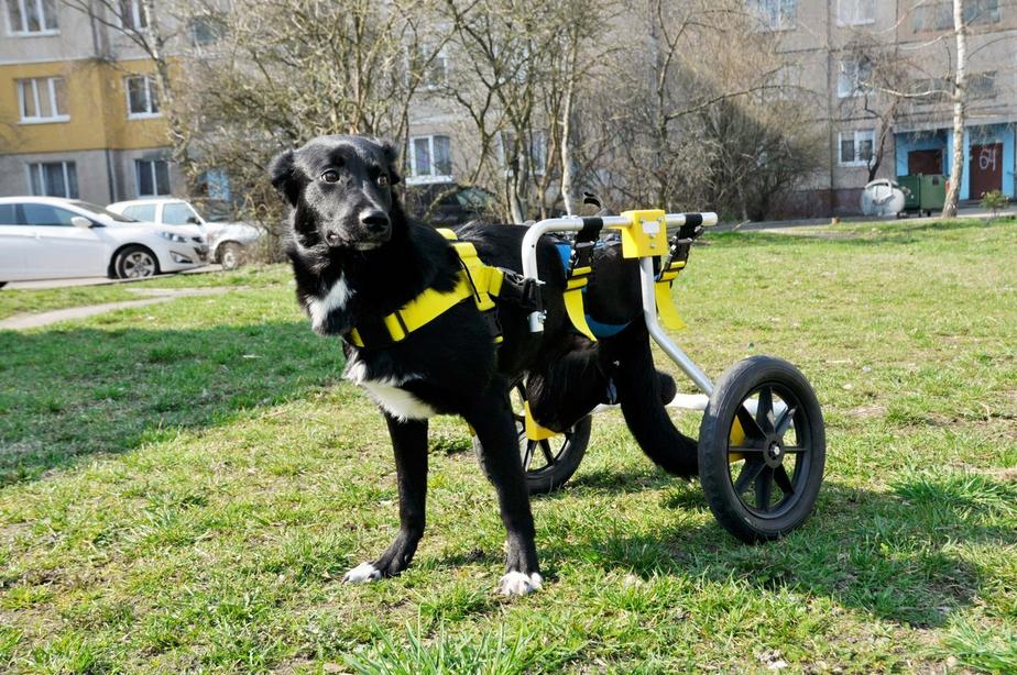 """Фото из группы """"Дай лапки. Помощь бездомным животным""""  / """"ВКонтакте"""""""