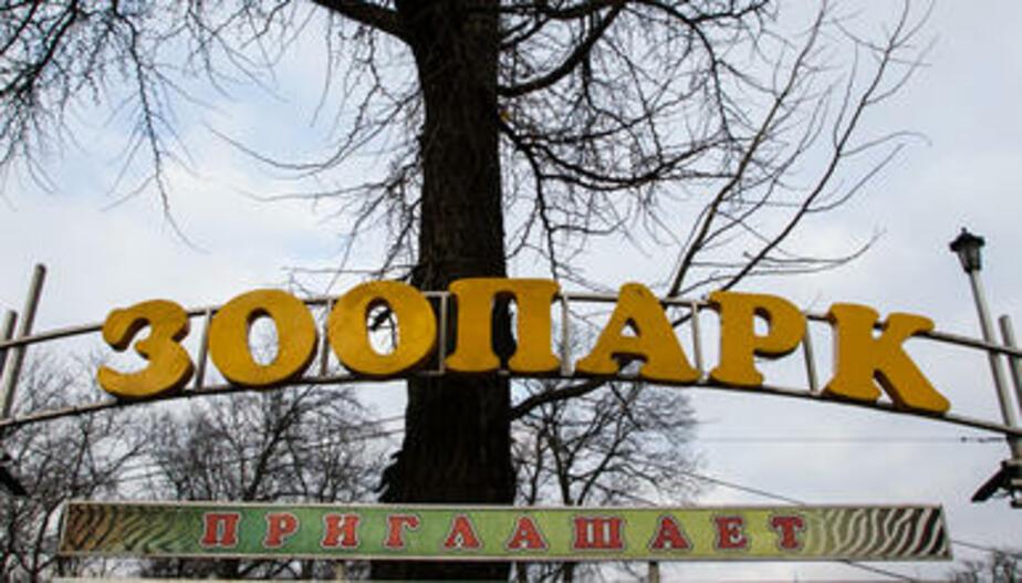 Вход в калининградский зоопарк с ул. Чайковского временно закроют из-за ремонта