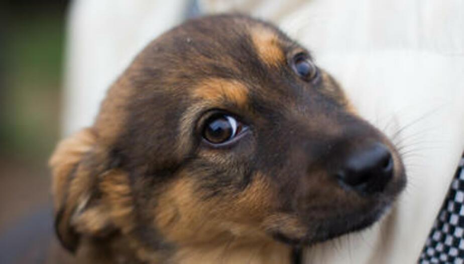 В Калининграде нашли место под приют для бездомных собак на время ЧМ-2018