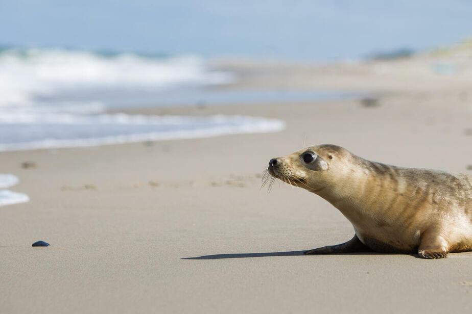 В Росприроднадзоре рассказали, чем опасны селфи с тюленями
