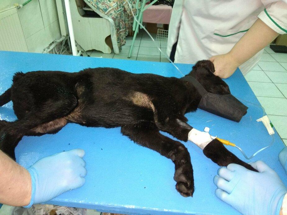 Из-за горящей травы в Железнодорожном погибли две собаки и получили ожоги щенки