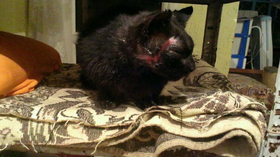 Калининградский приют для кошек-инвалидов просит помощи для больных животных
