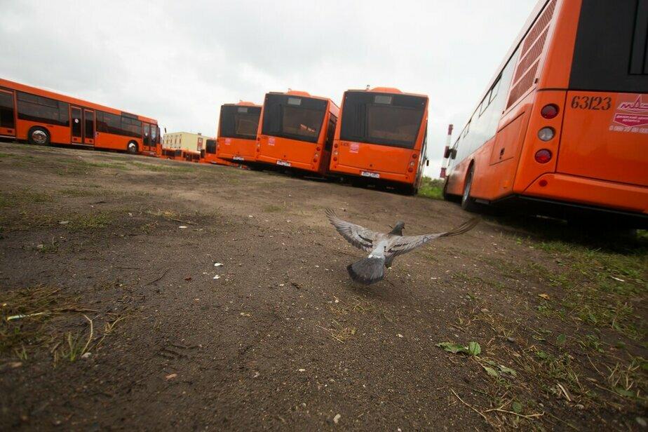 В Калининграде во время матча ЧМ Сербия — Швейцария количество автобусов увеличат вдвое