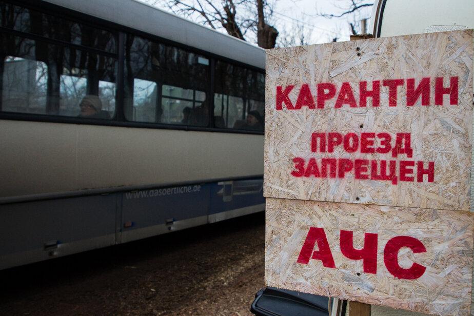 В Калининградской области выявили новые очаги АЧС, в зоне риска 10 тысяч свиней