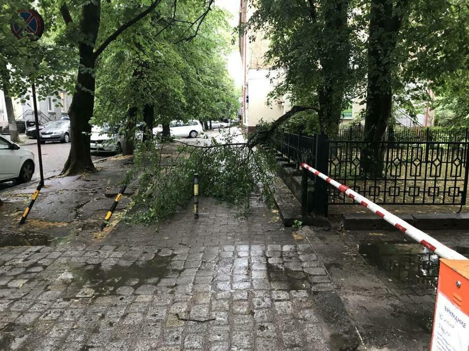 Упавшие деревья, сломанная остановка: в Калининград пришёл циклон из Скандинавии (фото, обновляется)