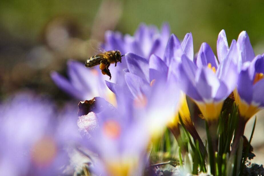 Калининградские эксперты рассказали, как отличить натуральный мёд от подделки