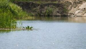 В озере на Мамоновском шоссе найдено тело пропавшей 89-летней пенсионерки