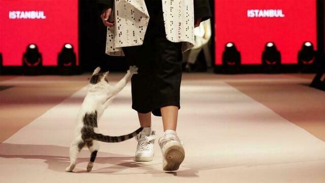 В Турции кошка