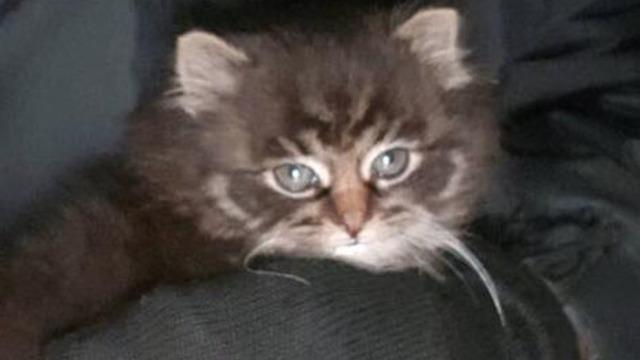 В Калининграде курсант спас котёнка из трещины в стене