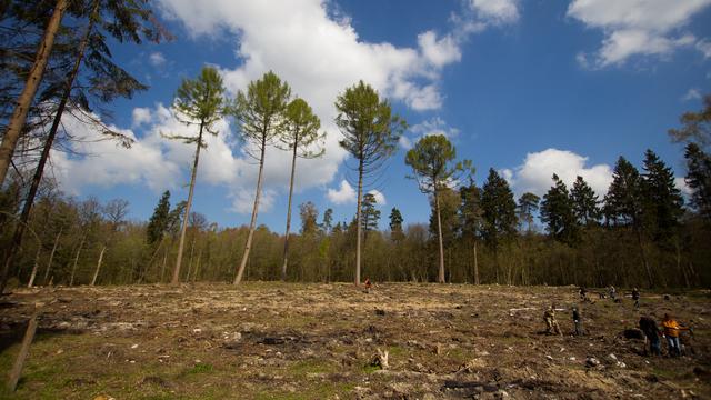 В лесу Гвардейского района третий день ищут пропавшую пару грибников
