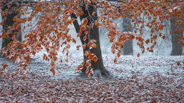 Заморозки в Калининграде