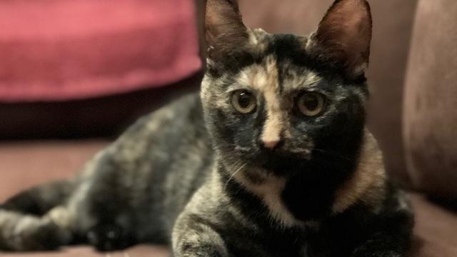 Приют для животных собирает деньги, чтобы отправить кошек жить в Германию