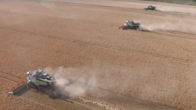 Как убирали урожай на калининградских полях — с высоты птичьего полёта (видео)