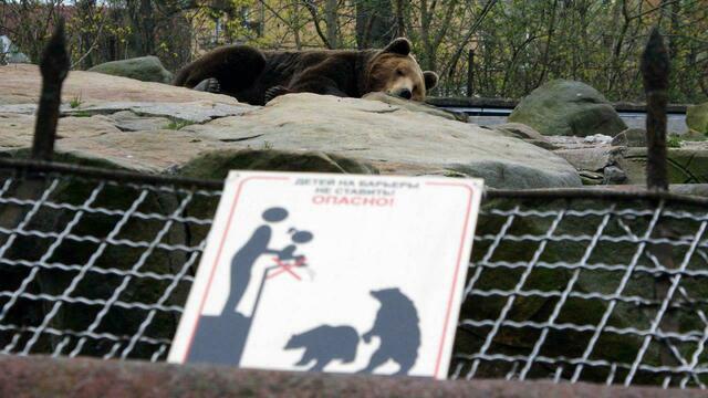 Калининградский зоопарк в новогодние праздники изменит режим работы