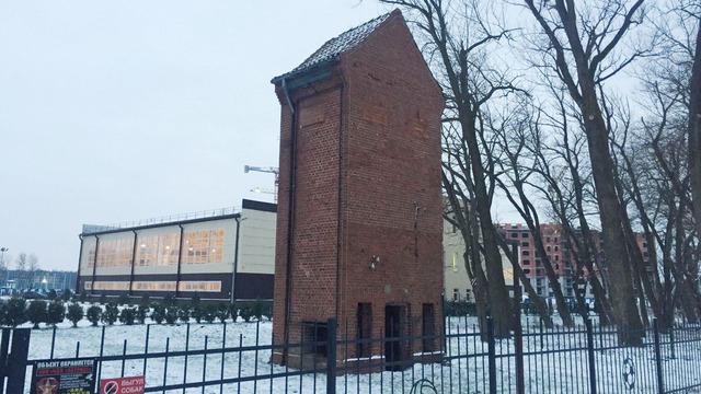В Зеленоградске появится музей филинов и сов