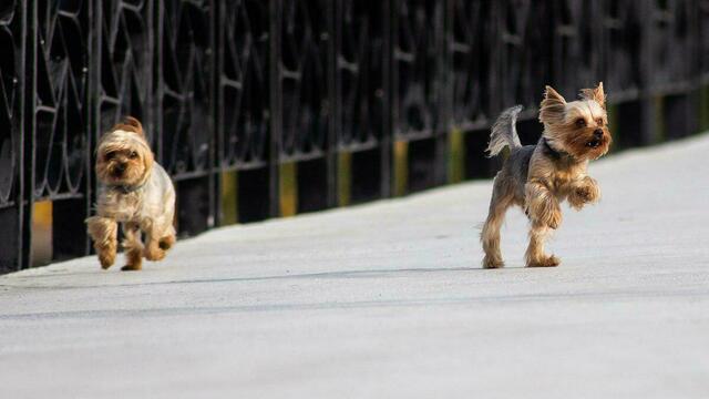 Выгул собак и контактные зоопарки: в законопроект о защите животных внесли 11 поправок