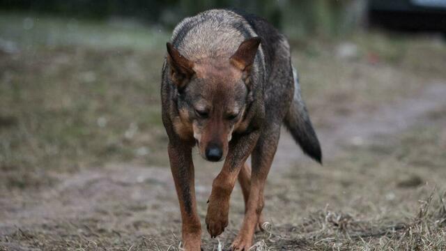 Владельцев животных обязали не спускать собак с поводка и стерилизовать кошек: подробно о новом законе