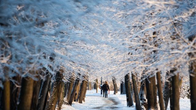 Снежная зима в Калининграде
