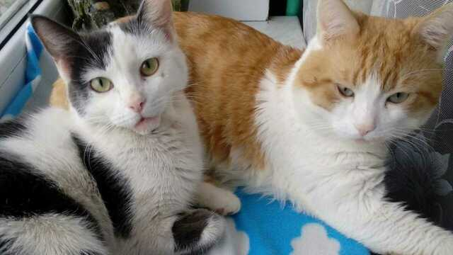 Спасённую на деньги из детских копилок сбитую кошку забрали в семью