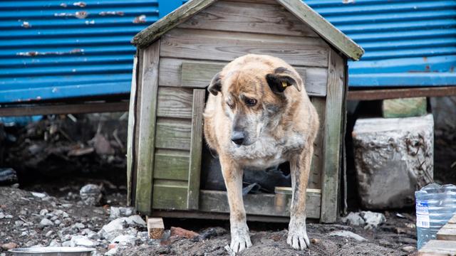 Четвероногий прихожанин по имени Малыш: как живёт цирковой пёс у калининградской синагоги