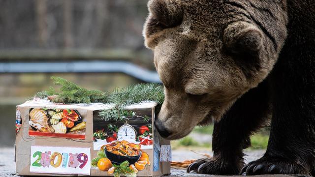 В Калининградском зоопарке поздравили с Новым годом животных (фото)