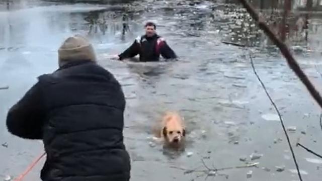 На Летнем озере рабочие спасли провалившуюся под лёд собаку (видео)