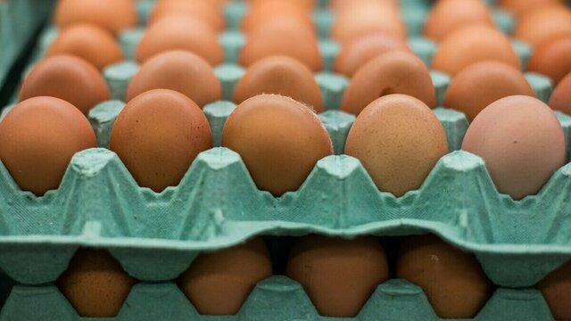 В Госдуме предложили запретить продажу яиц в упаковках по девять штук