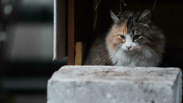 На погранпереходе в Мамоново кот с лисой подрались из-за сосиски (видео)