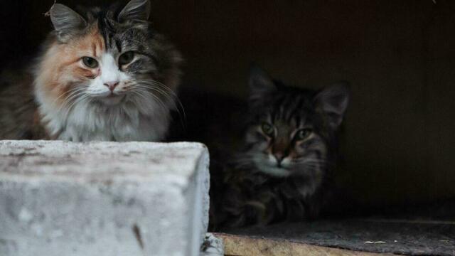 Сотрудники магазина Duty Free в Мамоново рассказали о коте и лисе, не поделивших сосиску
