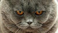 Самую толстую кошку Великобритании вернули в приют из-за скверного характера